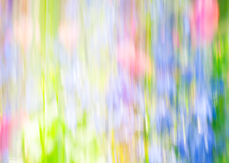 June 2, 2014<br /> <br /> Flower Garden Abstract<br /> <br /> * I love shooting and editing abstracts. <br /> <br /> I think Billie Jean's idea for an abstract theme is great. Keep me posted!!!!