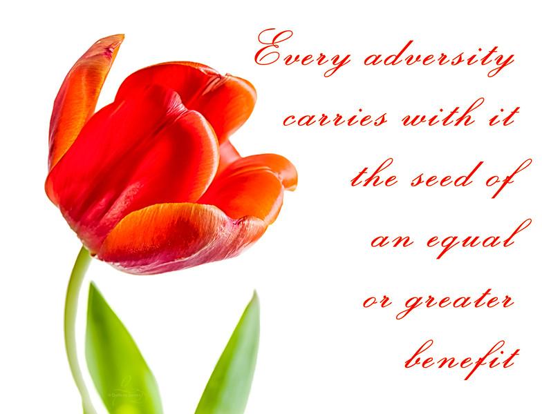 Every Adversity...