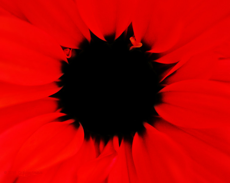 """Day Ten<br /> <br /> """"Lest We Forget"""""""