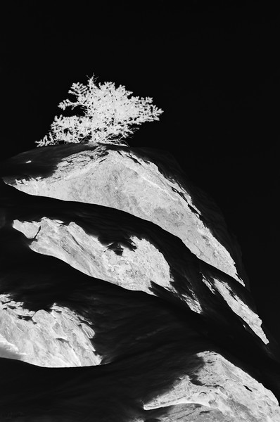 January 22, 2013<br />  <br /> Snow Mound<br />  <br /> *  This is an image of a tree on the top of  a snowy mound. The original image was nothing special so I started playing with it. I was hoping to create a natural abstract, as our club competition theme this month is Abstract. When I applied this negative effect I got what I was looking for  :)<br /> <br /> Jasper National Park, Alberta<br /> <br /> Jasper in January - Embrace winter!