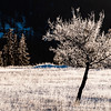 January 4, 2015<br /> <br /> Frosty<br /> <br /> Jasper National Park, Alberta<br /> <br /> * For the month of January, I will once again be posting images from my annual trips to Jasper in January