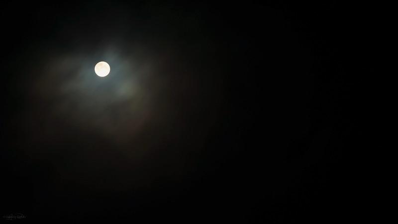 November 11, 2011<br /> <br /> Full Beaver Moon<br /> <br /> Elk Island Retreat<br /> Near Fort Saskatchewan, Alberta