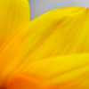 "June 14, 2011<br /> <br /> ""Sunflower""<br /> <br /> * We are leaving on vacation tomorrow morning :) <br /> Happy shooting! See you in July!!<br /> <br /> Peace!"