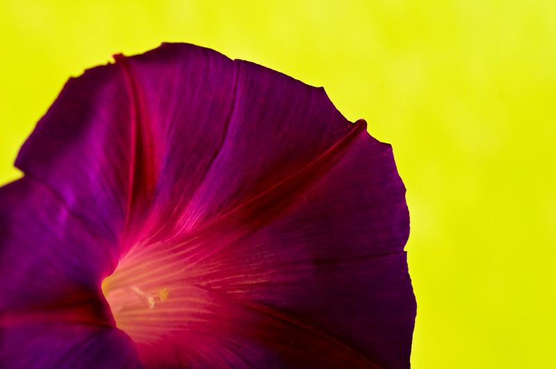 September 2, 2012<br /> <br /> Morning Glory