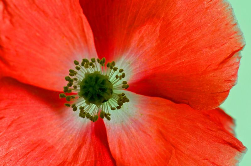 September 4, 2012<br /> <br /> Poppy