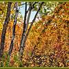 October 3, 2014<br /> <br /> Autumn in Alberta<br /> <br /> Elk Island Retreat<br /> Rural Alberta