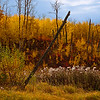 Day One<br /> <br /> Fall Colours<br /> <br /> Elk Island National Park, Alberta