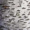 April 10, 2103<br /> <br /> Barking Up the Tree<br /> <br /> Devonian Botanic Gardens<br /> Devon, Alberta
