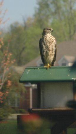 April 9 - look at our visitor!