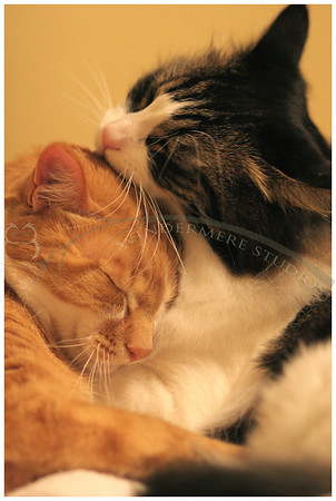 Feb. 8, 2005: Kitty love