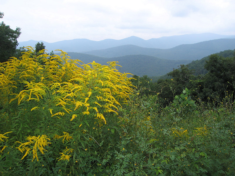 I guess this has some potential, taken in the Blue Ridge Mountains near Asheville