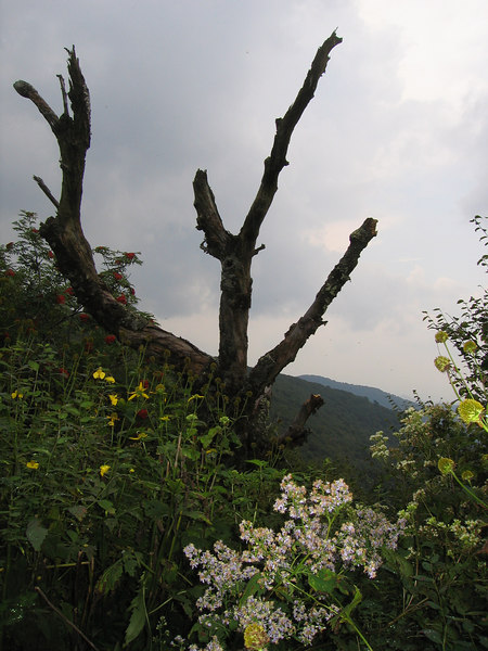 Not a bad shot that I took just a few days ago in the Blue Ridge Mountains, but really not that remarkable