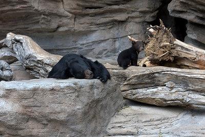 May - bear cub at the zoo