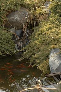 February - Domo goldfish