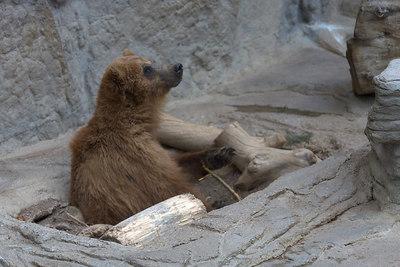 May - at the zoo