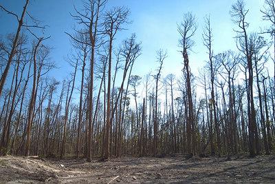 May - Mississippi Katrina Landfall