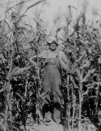Great grandfather stands in a corn field sometime in the 1920s.
