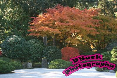 Japanese Garden 10-23-2007 119