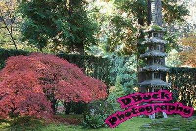 Japanese Garden 10-23-2007 070