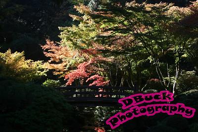 Japanese Garden 10-23-2007 009