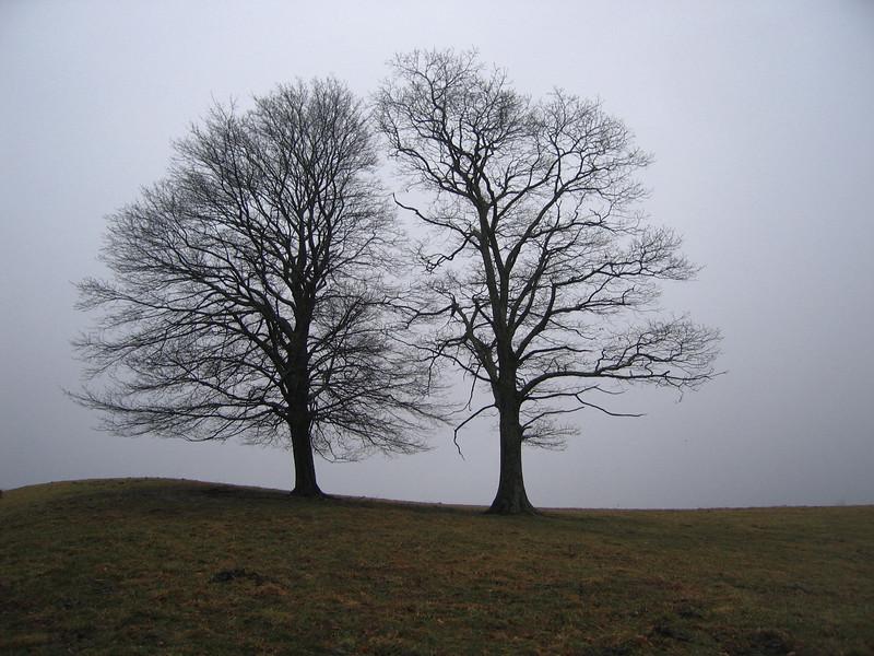 {Peaks,Valleys&Plains} 00aFavorite 12252006 Two trees, Blue Ridge Parkway, Boone