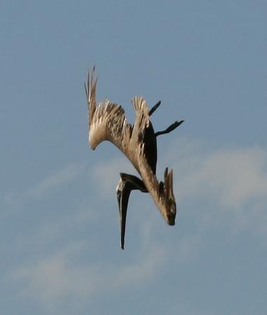 {Birds} 00aFavorite 20070903 IMG_8834