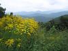 {Peaks,Valleys&Plains} 00aFavorite View Stony Bald (4563ft) fr 3750ft on Blue Ridge Pkwy [7913]