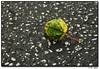 "5Aug07  leaf on pavement.  <a href=""http://carpelumen.smugmug.com/gallery/2321801/1/180736359/Medium"">today's alternate.</a>  <a href=""http://carpelumen.smugmug.com/gallery/1730100/1/86173892/Medium"">one year ago.</a>  f/8, 1/320s, iso 200."
