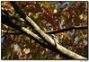 """<a href=""""http://carpelumen.smugmug.com/gallery/3762079/1/216808106/Medium"""">3Nov07</a>  red headed woodpecker working the spot."""