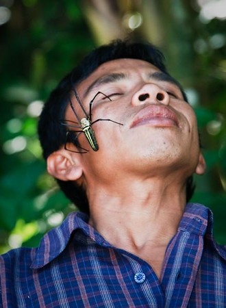 "Our ""rice fields walk"" guide in Tetebatu was more than happy to share his face with the local spiders."