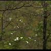 """18Apr08  from <a href=""""http://carpelumen.smugmug.com/keyword/graves%20park"""">a park</a> near work.    f/5.6, 1/800s, iso 200."""