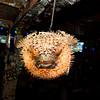 Blowfish lighting