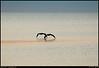 """(15Mar08)  morning beach patrol, waveland, ms.  <a href=""""http://carpelumen.smugmug.com/gallery/2530267_2Xcsn/1/136292606_bYxt4/Medium"""">one year ago.</a>  f/5.3, 1/320s, iso 200."""