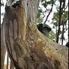 """17Oct08  knotty wood.  <a href=""""http://carpelumen.smugmug.com/gallery/3610159_bUNyu/2/209589054_feiDR/Medium"""">one year ago.</a>  f/11, 1/15s, iso 640."""