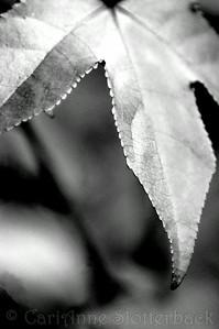 2008_0105