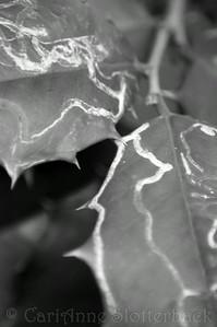 2008_0112