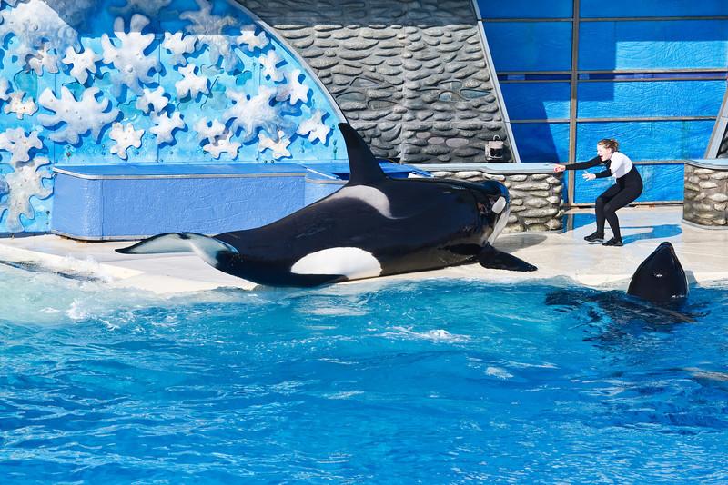 August 10, 2009<br /> Orca Encounter<br /> <br /> Sea World, San Diego, CA