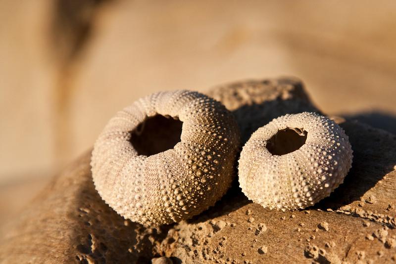June 26, 2009<br /> Sea Urchins Shells