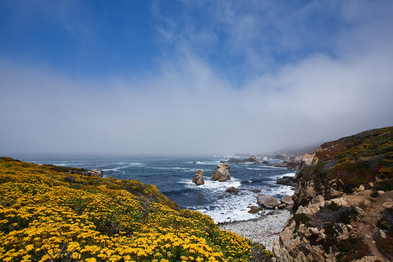 June 29, 2009<br /> Yellow, Blue and Fog<br /> Garrapata State Park, Big Sur, California