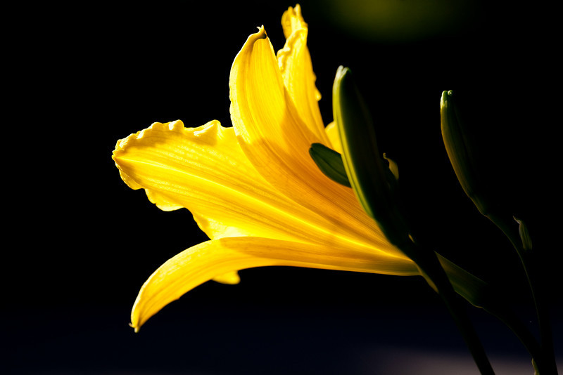 May 29, 2009<br /> Backlit flower