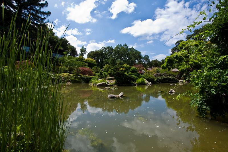 "June 3, 2009<br /> Koi pond in Hakone Gardens <br /> Hakone is Japanese estate garden located in Saratoga, CA. <br />  <a href=""http://www.hakone.com/"">http://www.hakone.com/</a>"