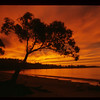 Sunrise near Orford, Tasmania, 1984.