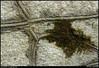 "16Aug09  moss on granite.  <a href=""http://carpelumen.smugmug.com/gallery/5590065_XKpdV/2/353095218_GDHPJ/Medium"">one year ago,</a> off to college.  f/9, 1/100s, iso 400."