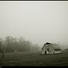 "(16Mar09)  misty fog on vaughter's farm.  <a href=""http://carpelumen.smugmug.com/gallery/4440280_LzGWs/2/268706501_Guxkk/Medium"">one year ago.</a>  f/5, 1/1000s, iso 400."