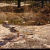 """(28Mar09)  overflowing pool, arabia mountain.  <a href=""""http://carpelumen.smugmug.com/gallery/4440280_LzGWs/2/271718585_biDj3/Medium"""">one year ago.</a>  f/8, 1/400s, iso 200."""