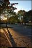 "(3Nov09)  the long shadows of an early, autumn evening.  <a href=""http://carpelumen.smugmug.com/Photography/2008/November08/6426286_qkVug/1/409541035_wocK6/Medium"">one year ago.</a>  f/8, 1/250s, iso 200."