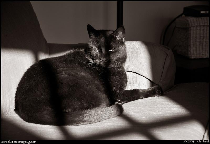 "(30Nov09)  his place in the sun.  <a href=""http://carpelumen.smugmug.com/Photography/2008/November08/6426286_qkVug/1/427491782_G4MtS/Medium"">one year ago.</a>  f/5, 1/125s, iso 200."