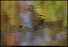 "(28Nov09)  reflected pallette.  <a href=""http://carpelumen.smugmug.com/Photography/2008/November08/6426286_qkVug/1/426687831_sCxhm/Medium"">one year ago.</a>  f/5.3, 1/125s, iso 200."