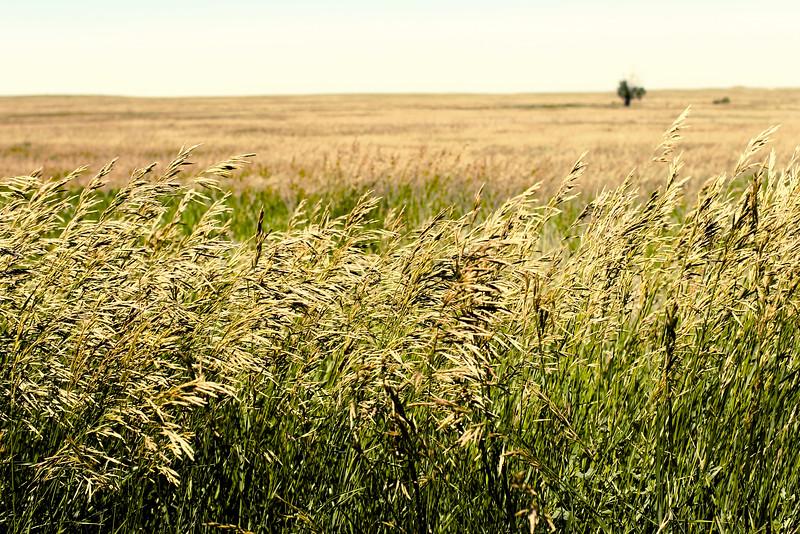 Grassy plains near the Badlands of South Dakota.