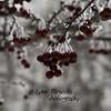 {17/365} January 17<br /> Frozen